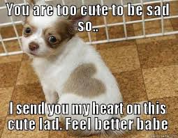Feel Better Meme - fresh cute puppy meme cute feel better memes image memes at