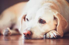 If A Dog Were Filling Out A Resume What To Feed A Dog With Diarrhea Lovetoknow