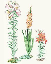 stem flowers single stem flower supports buy from gardener s supply