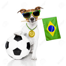Blank Brazil Flag Dog Waving Brazil Flag Stock Photo Picture And Royalty Free Image