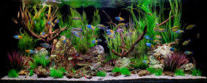 buying guide on best reverse osmosis systems for aquariums