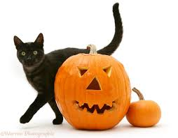 a cute black cat lying on a pumpkin royalty free cliparts black