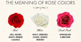 roses colors color meanings featured jpg