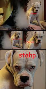 Know Your Meme Dog - stahp know your meme
