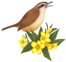 South Carolina birds images 28 state flowers and birds state birds and flowers poster jpg