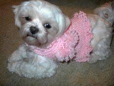 crochet pattern for dog coat crochet patterns for miniature dogs free unique crochet dog