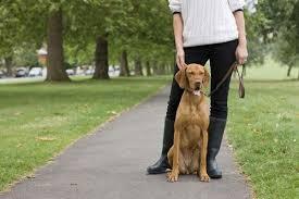 14 best Dog Leash Training Tips images on Pinterest