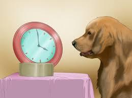 3 ways to stop a dog u0027s unwanted behavior wikihow