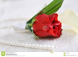 Red Rose Boutonniere Red Rose Boutonniere For The Groom Stock Photos Image 37256993