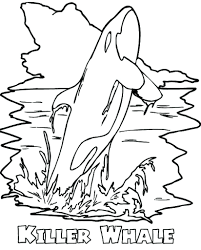 Whale Coloring Page Amazing Killer Kids Play Color Within Pages Whale Color Page