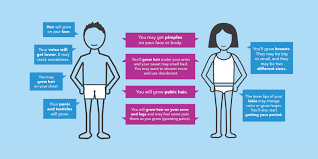 Picture Human Body Puberty In Females And Males Get Facts And Info About Puberty