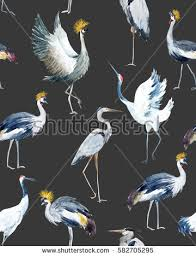 Wallpaper With Birds Water Color Pattern Birds African Crowned Stock Illustration