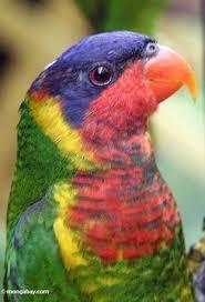 Dominant Plants Of The Tropical Rainforest - herbivores south american amazon rainforest
