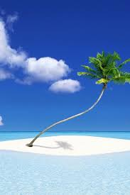 best 25 palm tree island ideas on island theme
