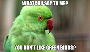 Meme Bird - whatchu say to me bird memes imgflip