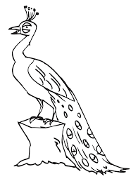 peacock coloring pages tail down for kids coloringstar