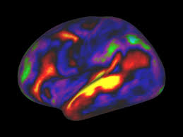 map f a new map of the brain redraws the boundaries of neuroscience wired
