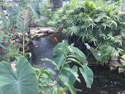 native plants fort myers the butterfly estates fort myers florida is a great place to