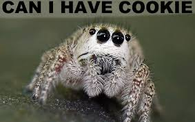 Cute Spider Meme - pet spider fimfiction