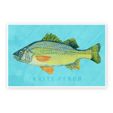 freshwater fish art series collection john w golden art white perch art print freshwater fish 8