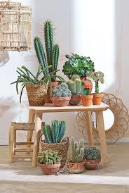cactus garden ideas newyorkfashion us