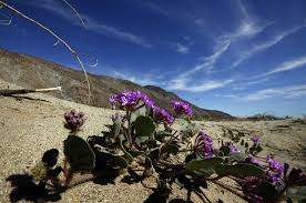 want to track the anza borrego bloom yourself here u0027s a list of