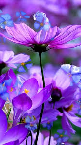 Spring Flower Pictures Best 25 Purple Flower Photos Ideas Only On Pinterest Accent