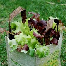 Vegetable Container Garden - growing lettuce in a reusable grocery bag