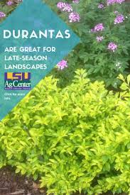 native plants of louisiana 426 best lawn u0026 garden images on pinterest lawn lsu and louisiana
