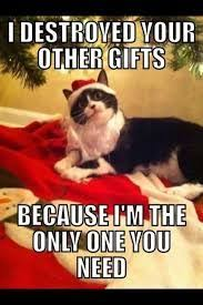 Christmas Cat Memes - catsmemes funny animal pictures cat memes just like cat funniest