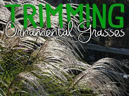 mckay s trimming ornamental grasses