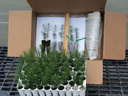 seedling favors redrock farm