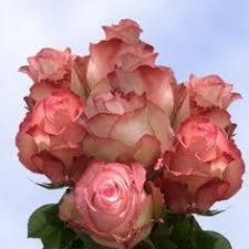 global roses engagement globalrose wholesale flowers