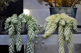 10 easy pieces best succulents gardenista