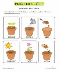 14 best plant theme images on pinterest spring crafts diy and