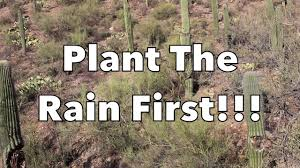 sonoran desert native plants the permaculture classroom sonoran desert food forest theory