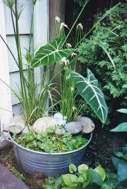 Container Water Garden Ideas Container Water Gardens Pinterest Home Outdoor Decoration