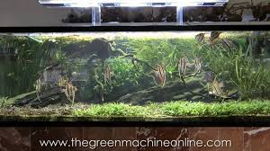 Aquascape Online Aquascaping Shop Tour Of The Green Machine Youtube
