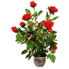 flower plants flower plants rose plants manufacturer from new delhi