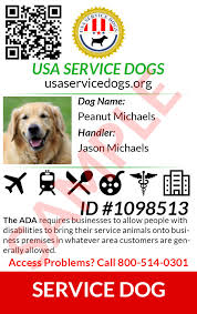 Comfort Dogs Certification Usa Service Dogs Registry Register Your Service Dog Today For Free