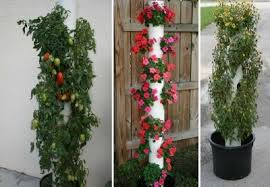 Pvc Pipe Trellis Diy Vertical Gardens Are They All Safe