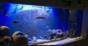 vasche acquario acquario di bolsena in provincia di viterbo vasche tattili e