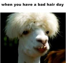 Bad Hair Day Meme - bad hair day funny pictures quotes memes funny images funny