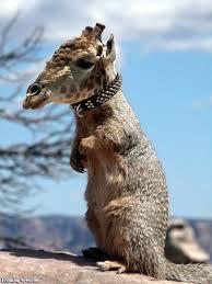 squirrel giraffe pictures