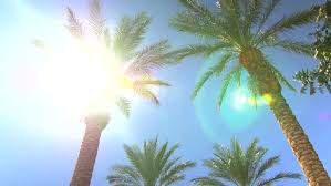 a palm tree and the sun in a original tropical dv ntsc