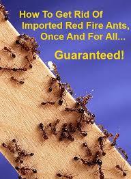 How To Kill Ants In The Kitchen by Best 25 Fire Ant Killers Ideas On Pinterest Fire Ants Homemade