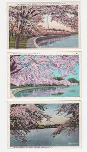 National Cherry Blossom Festival by 32 Best National Cherry Blossom Festival In Dc Images On Pinterest