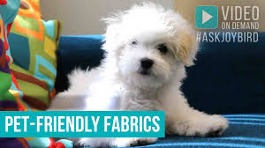 pet friendly fabrics joybird