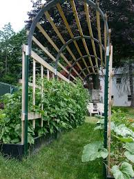 Growing Cucumbers Up A Trellis Grow 100 More Food In Half The Space Theprepperproject Com
