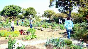 Different Types Of Garden - greening our schools